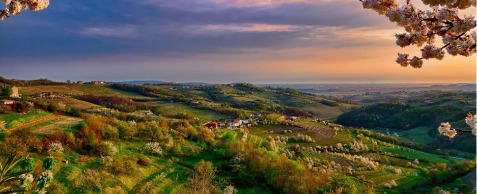 Polje, tradizione vinicola del Friuli e moderne tecnologie agricole