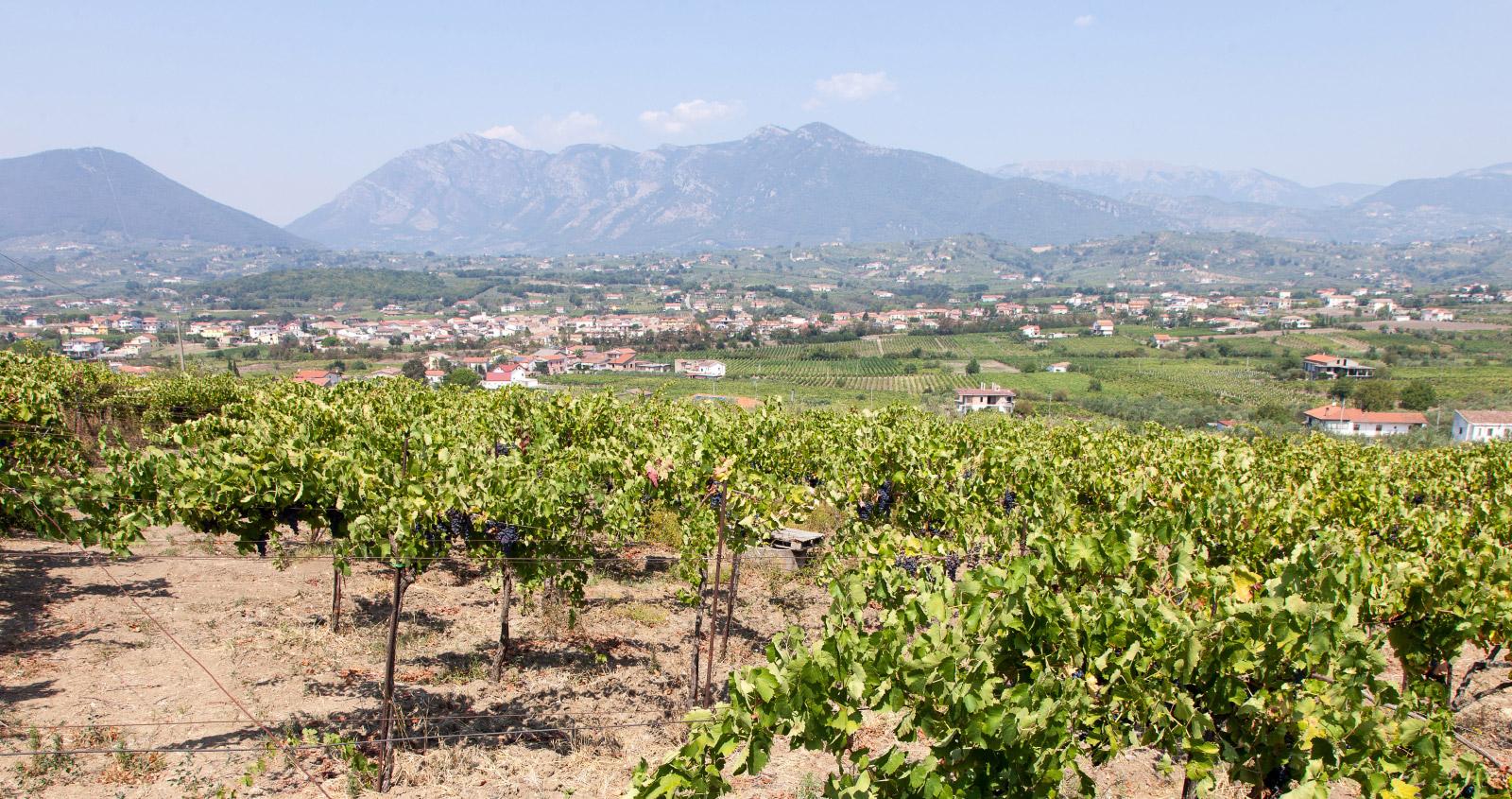 Torre Venere e l'etica del vino beneventano